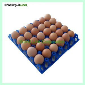 Plastic Egg tray (2)